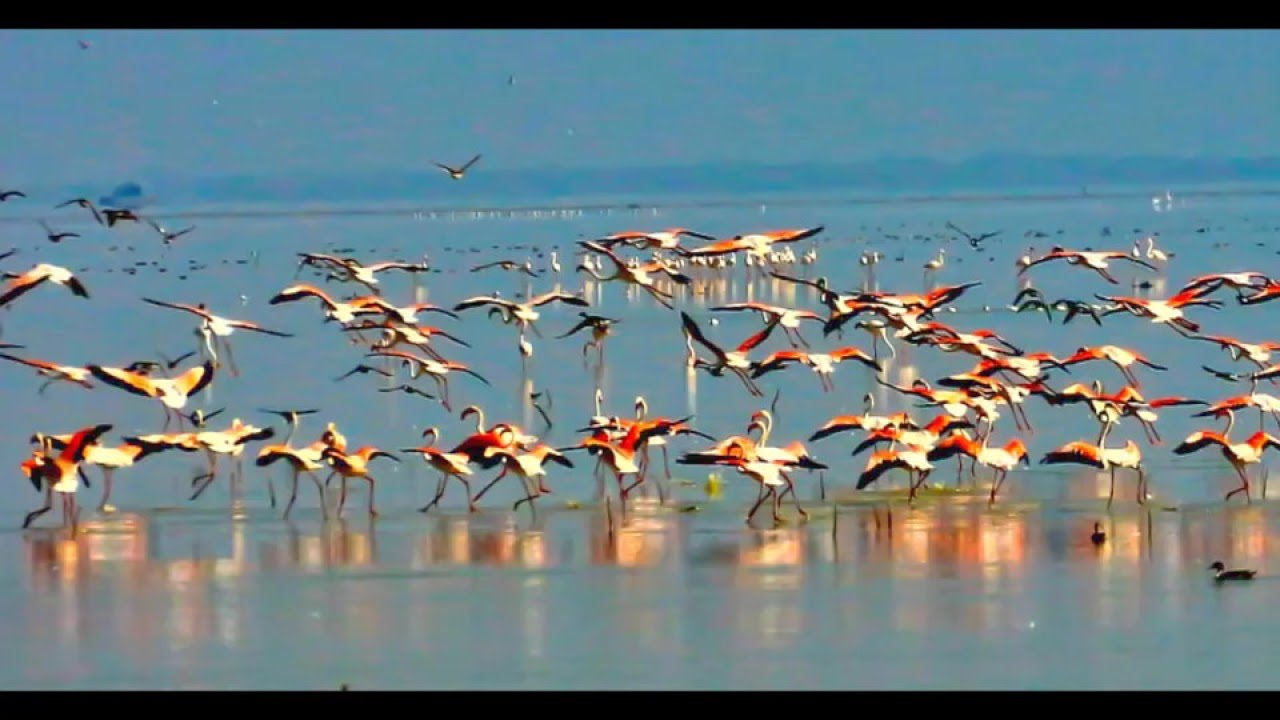 Image result for Pulicat Lake Bird Sanctuary images