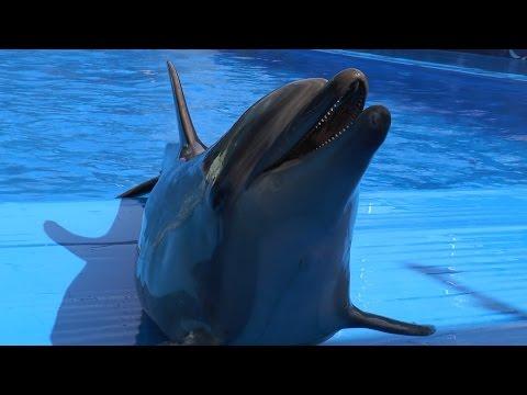 La Chişinău a fost inaugurat primul delfinariu din ţară