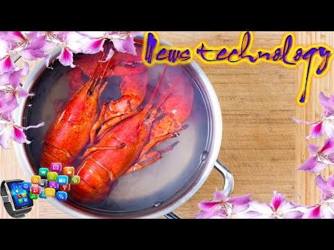 News Techcology -  Celebrities ask for ban on crustaceans being boiled