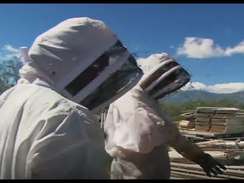 Killer Bees Are Dangerous