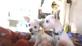 Puppy Sucker.wmv Thumbnail