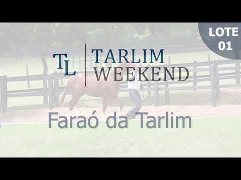 Lote 01 - Faraó da Tarlim (Potros Tarlim)