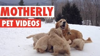 Sweet Motherly Pets Compilation 2016