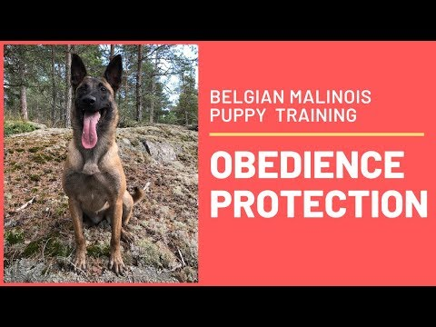 How to train a puppy obedience without force with Emma Willblad !!!