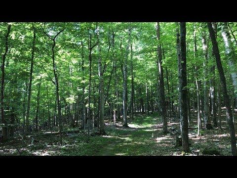 Evergreen - Audrey Assad - Lyrics