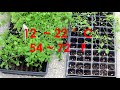 Starting Celery seedlings and separating them, easier and better way to grow celery