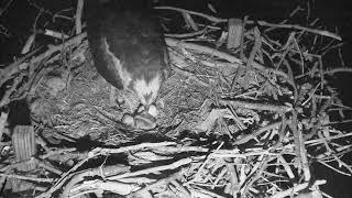 Osprey Nest - Chesapeake Conservancy Cam 05-23-2018 22:25:45 - 23:25:46 thumbnail