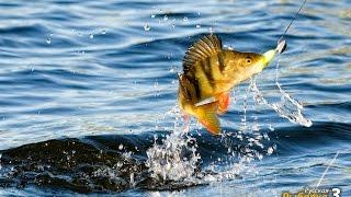 Русская рыбалка 3  Как начать играть