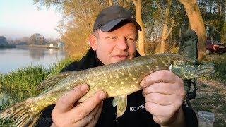 Jesienne szczupaki z rzeki Wisłok - jakie stosujemy zestawy ?   wędkarstwo Rzeszów