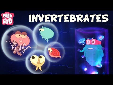 invertibrates