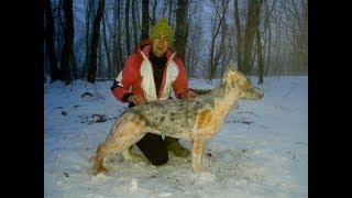 Как сделать собаку из снега. Немецкая овчарка из снега своими руками