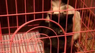 кот в тюрьме cat in prison