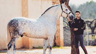 i-bought-a-huge-stallion