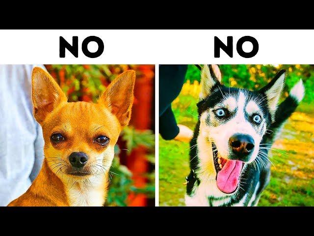 10 Razas de perros que son muy peligrosas para familias con niños
