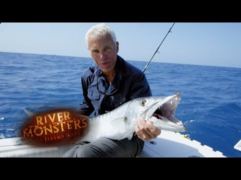 Jeremy Wade Catches FOUR Huge Barracuda! | BARRACUDA | River Monsters