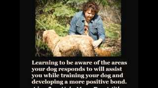 Dog Training & Boarding Twincities - Positive,gentle,effective