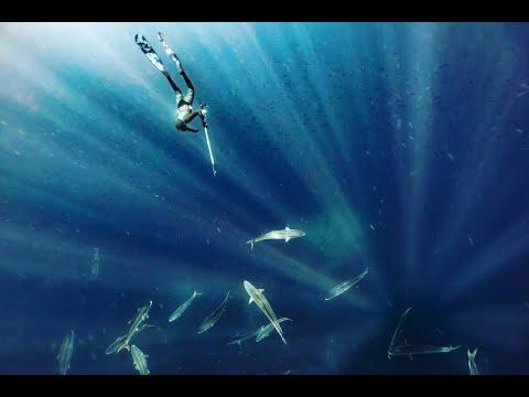 Wettie TV - Spearfishing Mokohinaus NZ