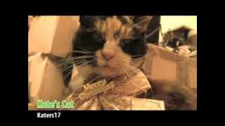 МЕГА ПРИКОЛ - Животные поют песенку (Смотреть Всем)