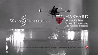Aerial-Aquatic Microrobot thumbnail