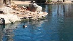 USA - Encanto Park (Phoenix, AZ) - Ducks2