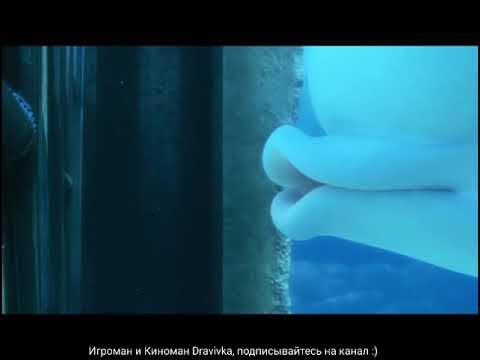 Акула Судьба и Белуха Пери помогают Дори ... отрывок из мультфильма(В поисках Дори/Finding Dory)2016