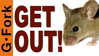 How To Get Rid Of Mice & Mouse Proof Your House - Gardenfork