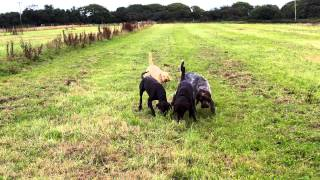 Dog Kennels Cornwall | Dog Boarding And Obedience Training Near Truro