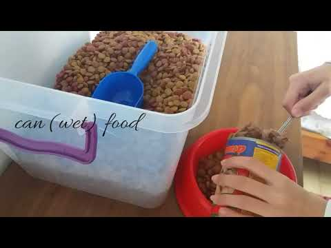 Dog feeding routine | what I feed my dog!