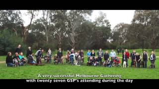 "Gsp - Australia July Gathering At ""banksia Dog Park"" In Melbourne"