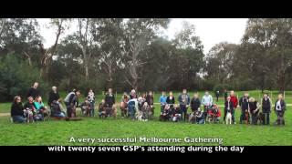 """Gsp - Australia July Gathering At """"banksia Dog Park"""" In Melbourne"""