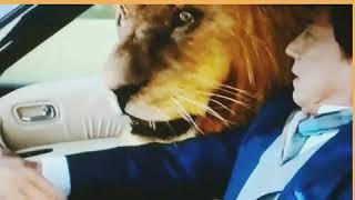 """Трейлер фильма """"Доспехи Бога"""" отрывок льва"""