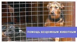 510 тысяч рублей для бездомных животных