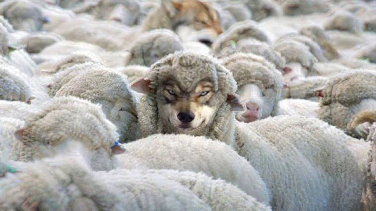 BEWARE of Wolves in Sheep's Clothing! False Prophets with Spirit of Anti-Christ - YouTube