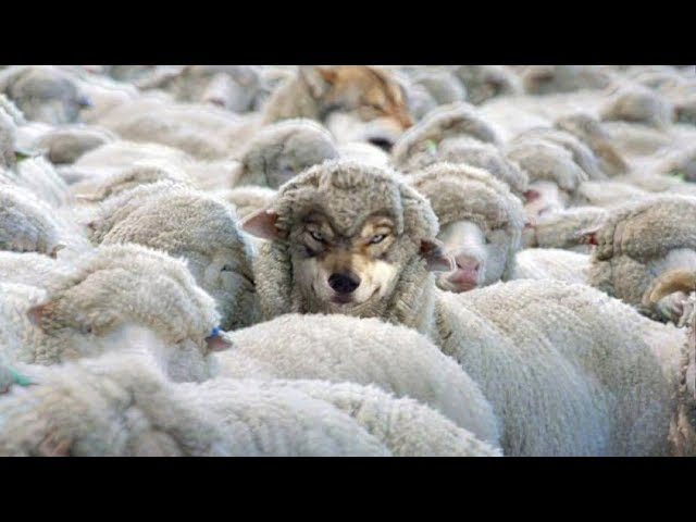 THEY are Everywhere, Beware of Wolves in Sheep's Clothing! False Prophets with Spirit of Anti-Christ