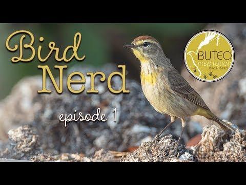 Ep1 - Birding In May-Ponagansett Rd, RI