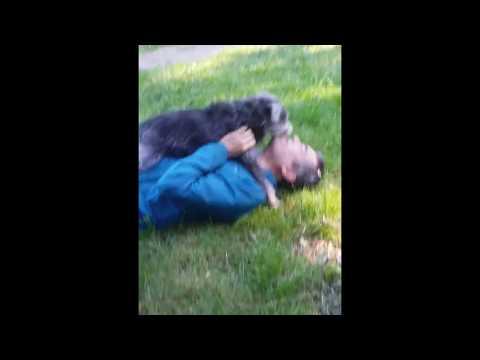 25 pound dog vs 140 pound man.