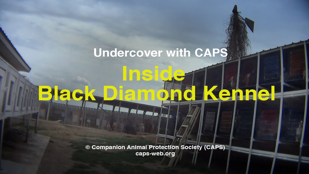 Undercover with CAPS  Inside Black Diamond Kennel - YouTube abdab409ced9