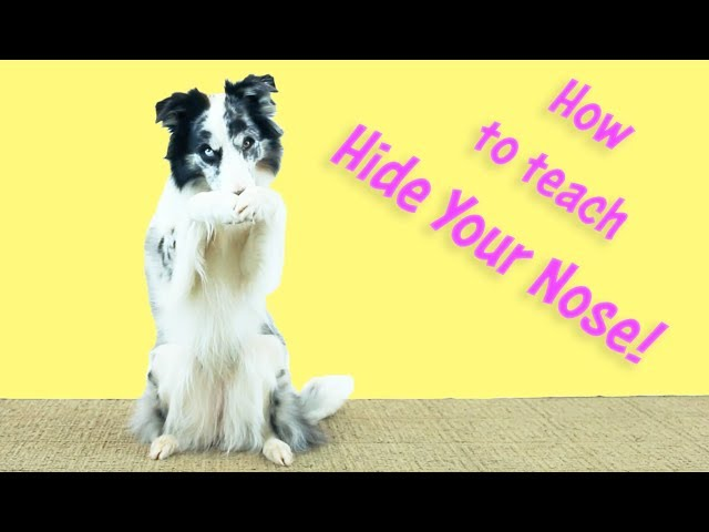 Cover Your Nose - Kikopup Dog Tricks Training