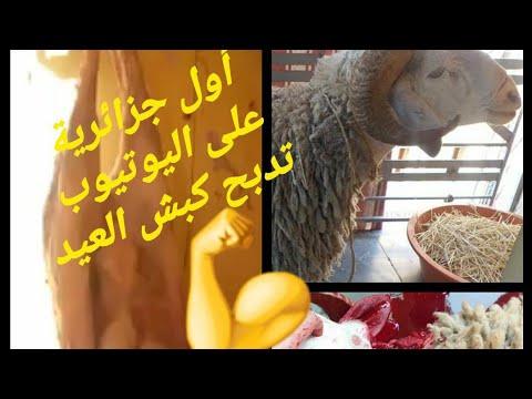 لأول مرة فاليوتيوب أمرأة جزائرية تذبح كبش العيد (عيد أضحى 2020): يوم العيد 🐏💪