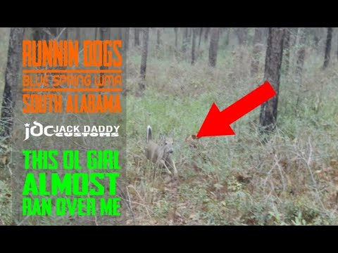 Deer Hunting With Dogs - Blue Springs WMA, Alabama - Deer Almost Runs Over Me!!!