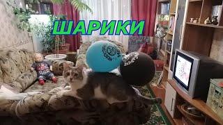 Коты и шарики