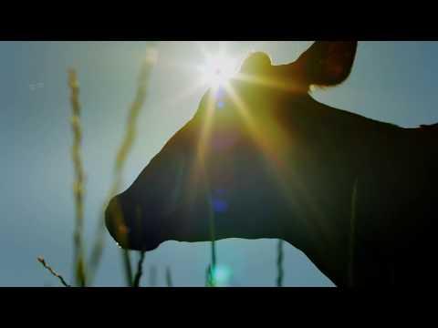 La vaca de Larsa nos plantea un dilema inspirado en Shakespeare
