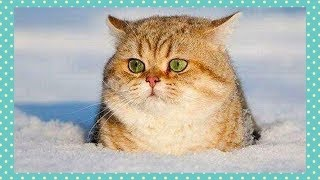 ❤️Super Cute Cats Doing Funny Things❤️#7