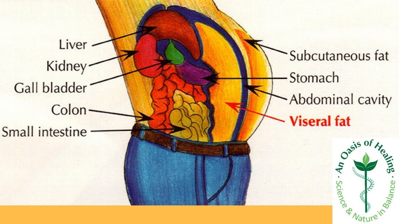 Why Is Visceral Fat So Dangerous - YouTube
