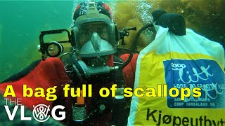 Scuba diving to inspect boat moorings and picking scallops worth 150$