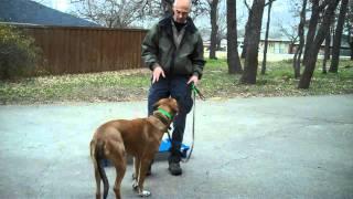 Duncan The Ridgeback Mix | Redeeming Dogs | Dfw Training