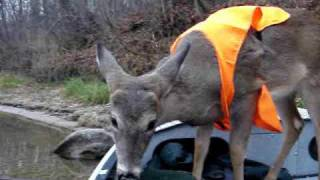 """Muskegon River Deer in boat""- Michigan"
