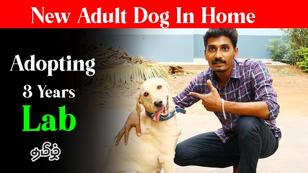 Adopting  3 Years Old Female Dog | Tamil