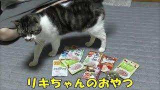 猫ちゃんにおやついっぱい買ってきたよ☆リキちゃんお薬の時間です☆楽しいおやつタイム・ご馳走に舌鼓【リキちゃんねる 猫動画】Cat videos キジトラ猫との暮らし・キャットフード色々