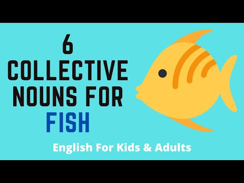 6 Collective Nouns For Fish